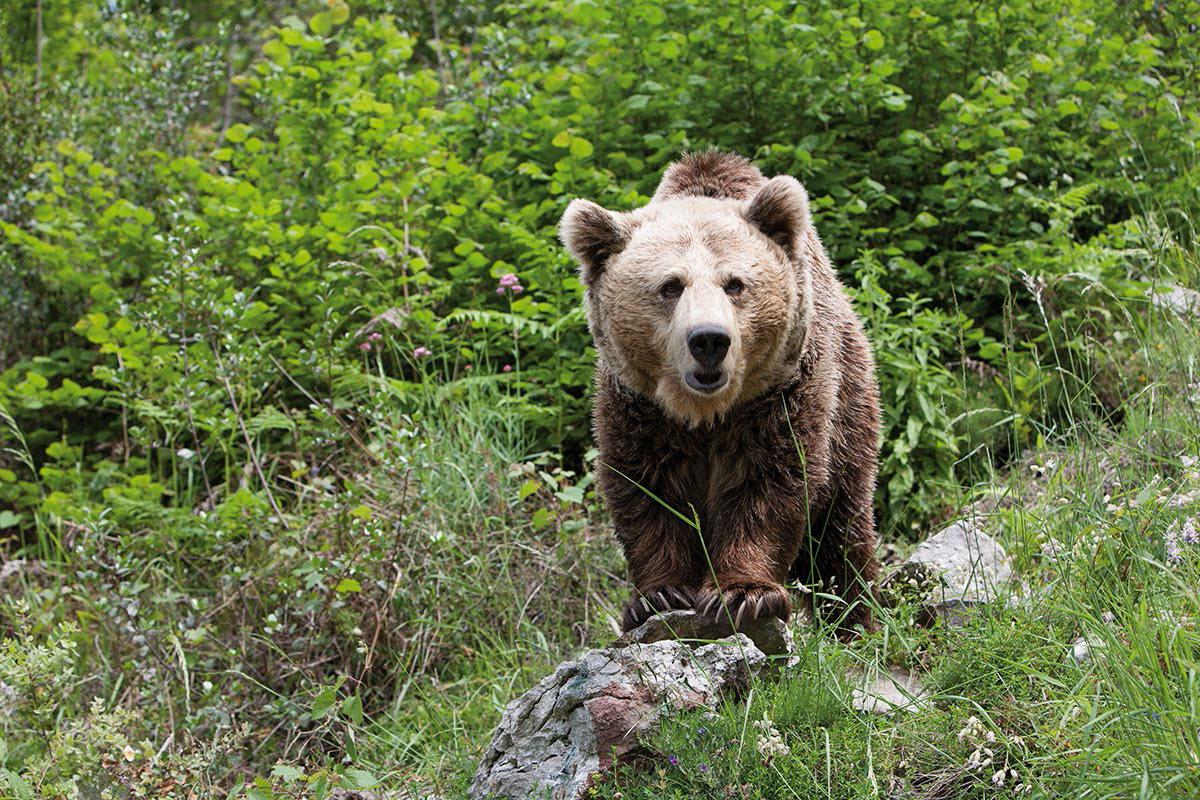 """La Fundación Oso de Asturias pone marcha la actividad """"Conoce nuestros osos"""""""