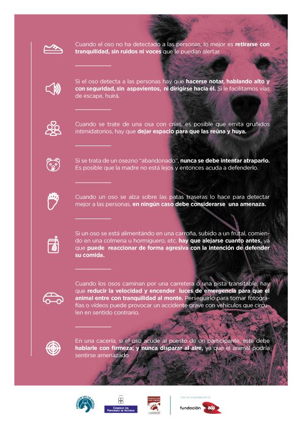 Cómo comportarse ante un oso, manual de buenas prácticas