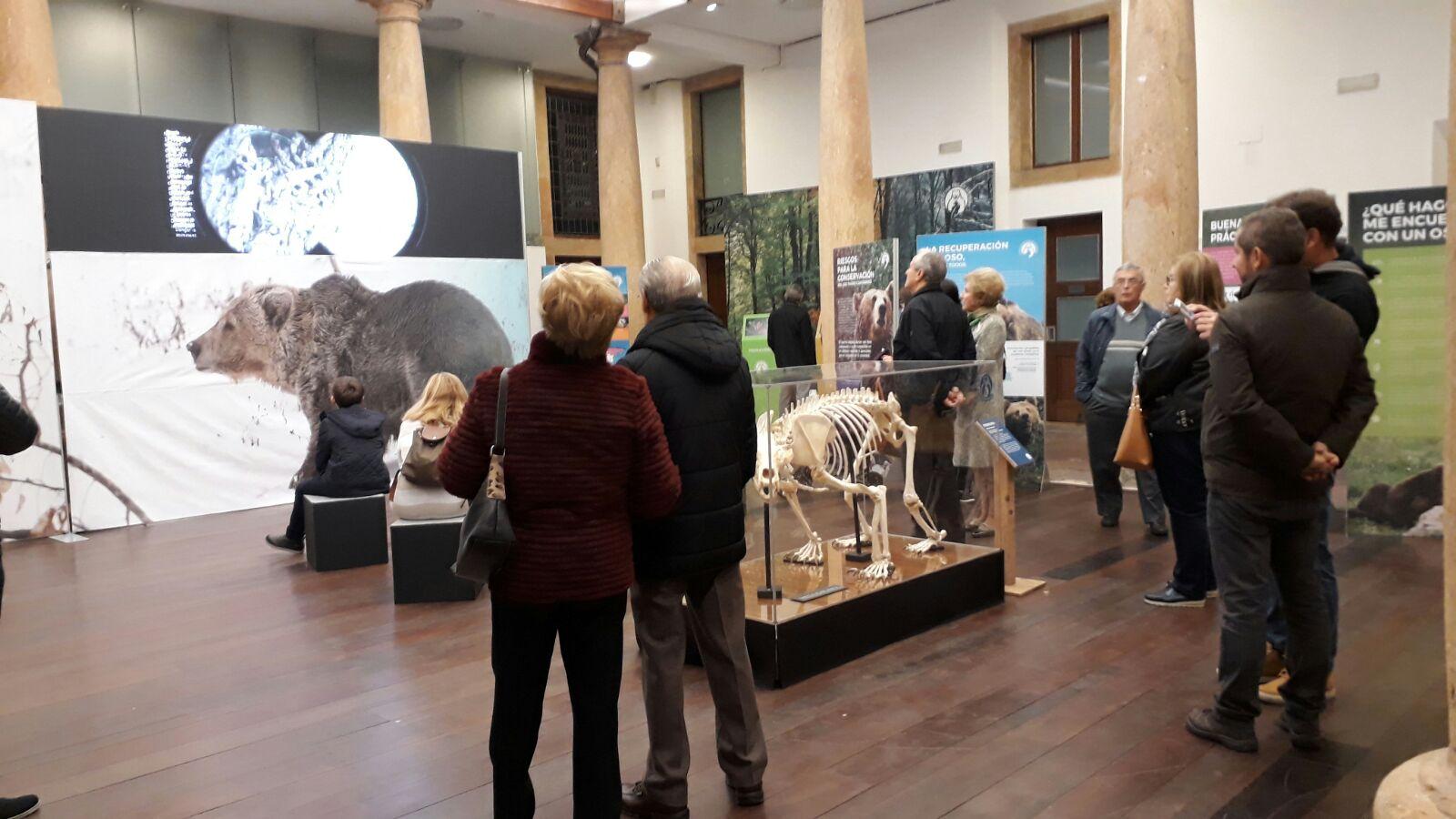 La exposición 'Osos' hace parada en Intu Asturias
