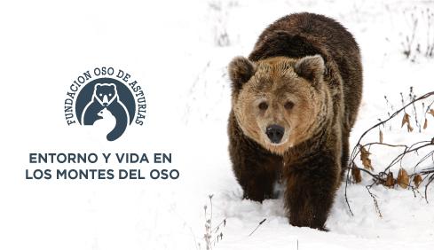 La FOA estrena un documental sobre el oso pardo y la biodiversidad que le rodea