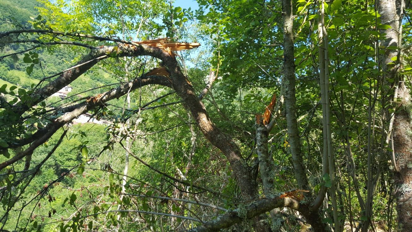 ¿Sabías que… también el bosque vive del oso?