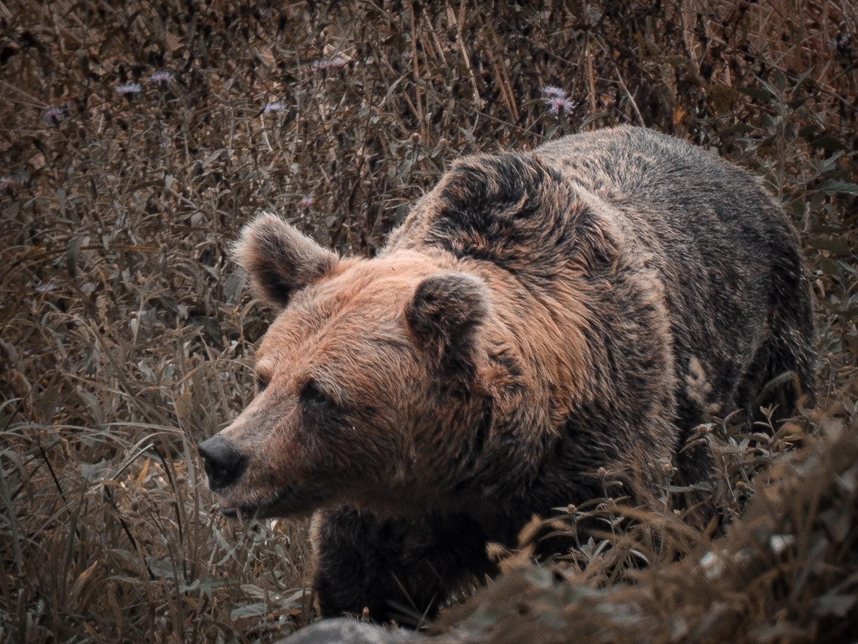 Preservar el hábitat osero es incentivarlo