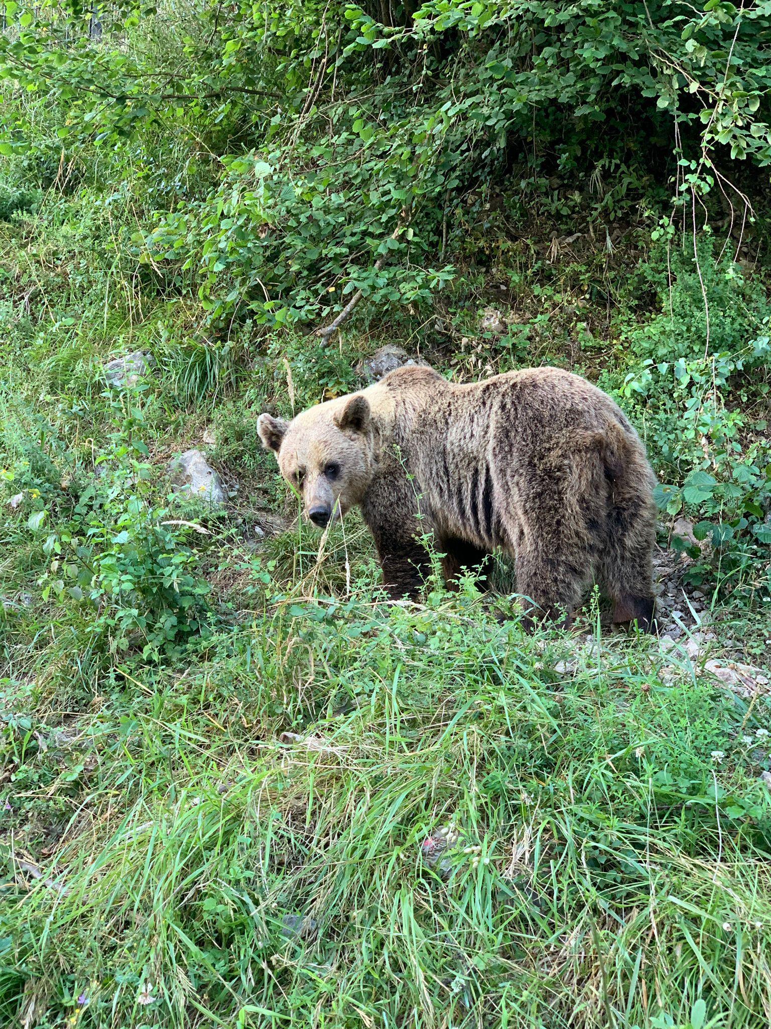 Para qué sirve un oso